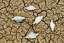famine LELB Society
