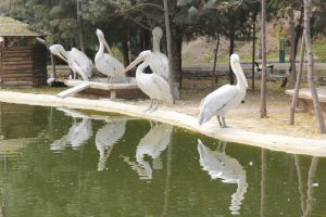 English Tours in Iran LELB Society Tehran Birds Garden 3
