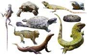 Reptile   English Flashcard for Reptile - LELB Society