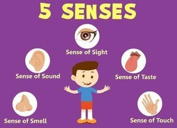 English Vocabulary about Five Senses