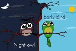 English Webinar on Early Birds vs. Night Owls - LELB Society