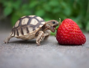 Diminutive 1100 words you need to know week 44 day 4 at LELB Society for GRE, TOEFL & IELTS
