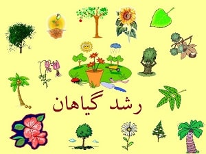 plant growth from seed to learn Persian online at LELB Society