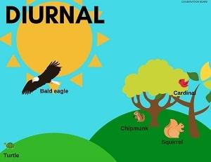 Diurnal GRE Vocabulary Flashcard at LELB Society