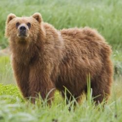 English Documentary on Bears with Transcript & Flashcards at LELB Society