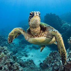 English documentary on Sea Turtles at LELB Society with transcript and flashcards